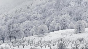 eine-schneelandschaft